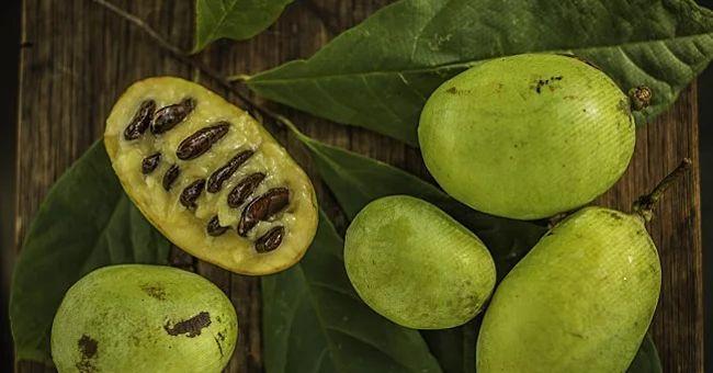 Indián banán, Pawpaw gyümölcse